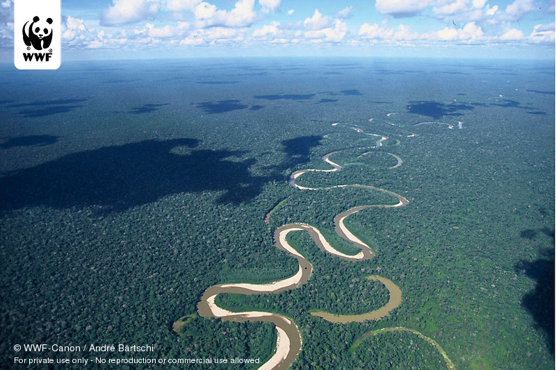 The Amazon RainforestUcayali River